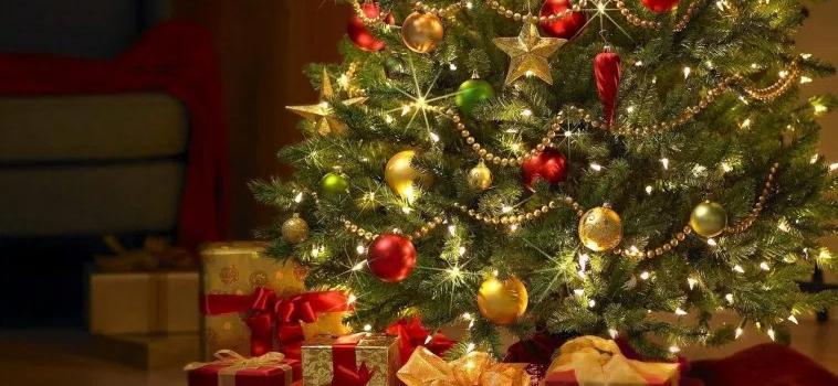 Vyberte ten pravý vianočný stromček do vášho interiéru
