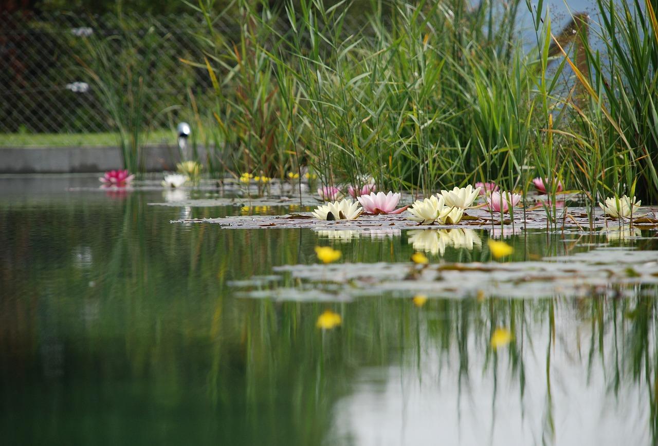 Vlastný biotop alebo kúpacie jazierko: Ako na to?