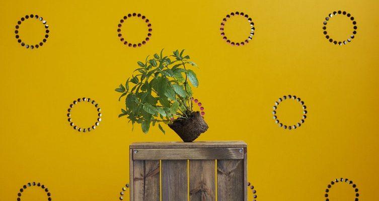 Žltá farba rozžiari každý domov