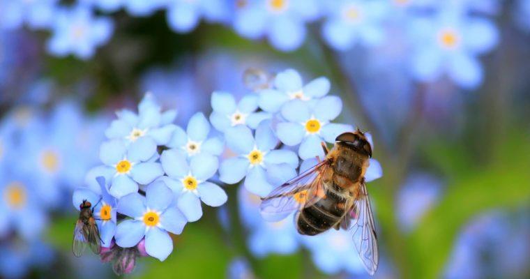 Pozvite na vašu záhradu hmyz