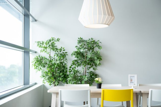 Umiestnenie izbové rastliny na svetlom mieste v izbe