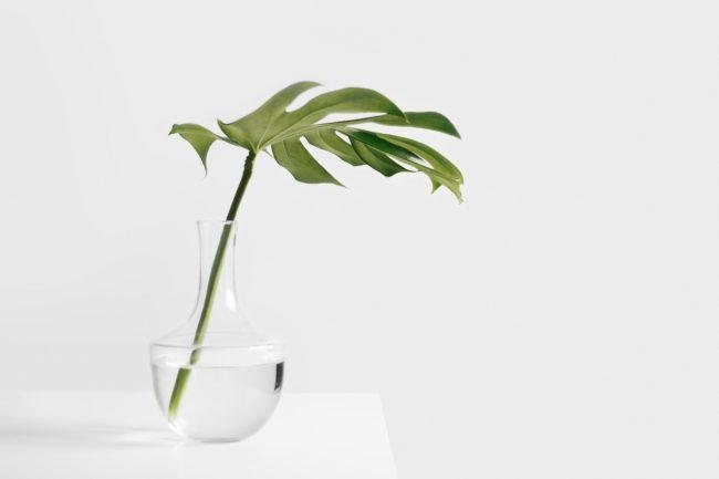 Izbová rastlina v sklenenej váze plnej vody