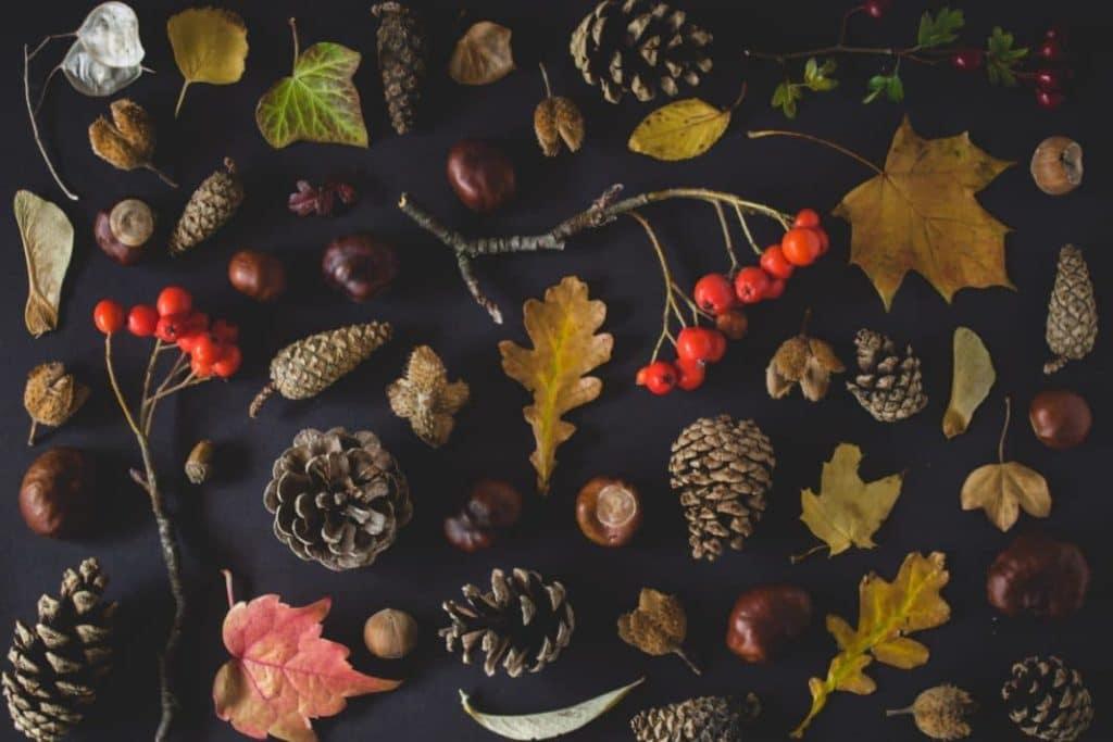 sisky-konariky-bobule-sipky-listy-gastany-jesenna-dekoracia-z-prirody
